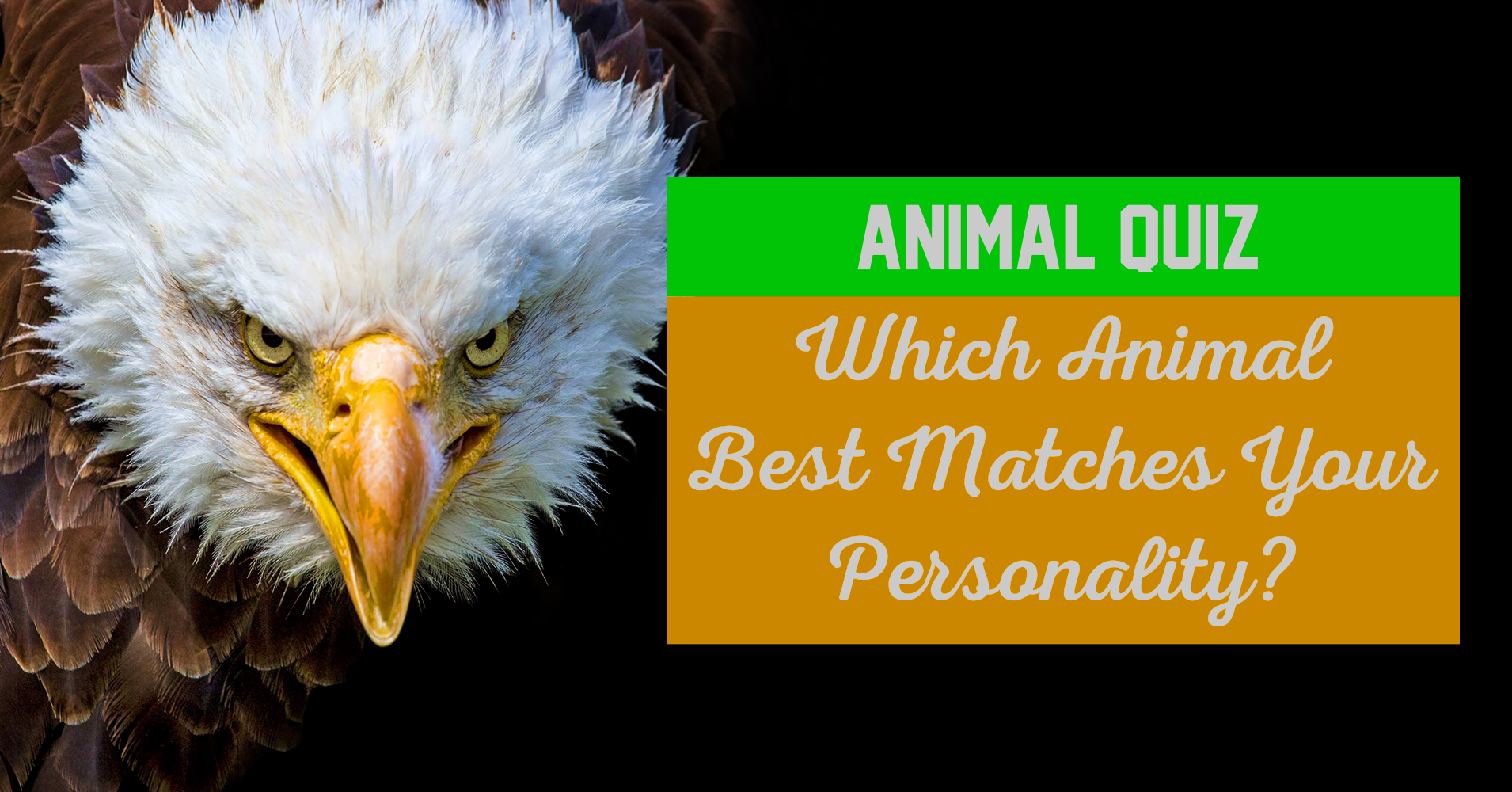 animal personality If the koala bear is the first animal you saw then chances are you have a personality which is as adorable and cute as that of the koala you are someone who is sweet, kind, and funny and someone who likes getting along with people irrespective of who they are.