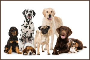 Are You A Dog Breed Expert?