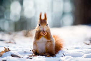 10 Blurred Photos Of Animals - Can You Na...