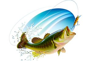 Bass Fishing Quiz