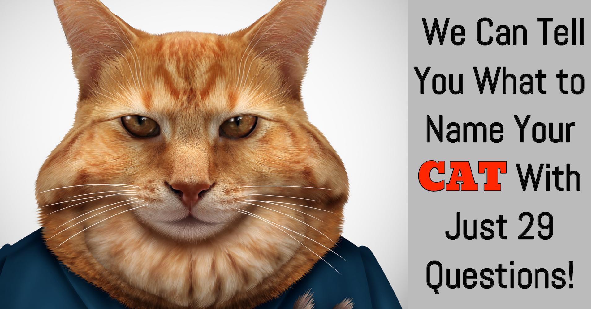 Cat Names Generator - Quiz - Quizony com