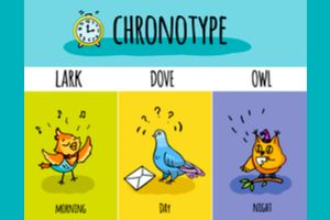 Chronotype Quiz