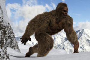 How Much do You Know About Bigfoot?