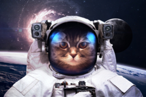 Why are there no living cats on Mars?