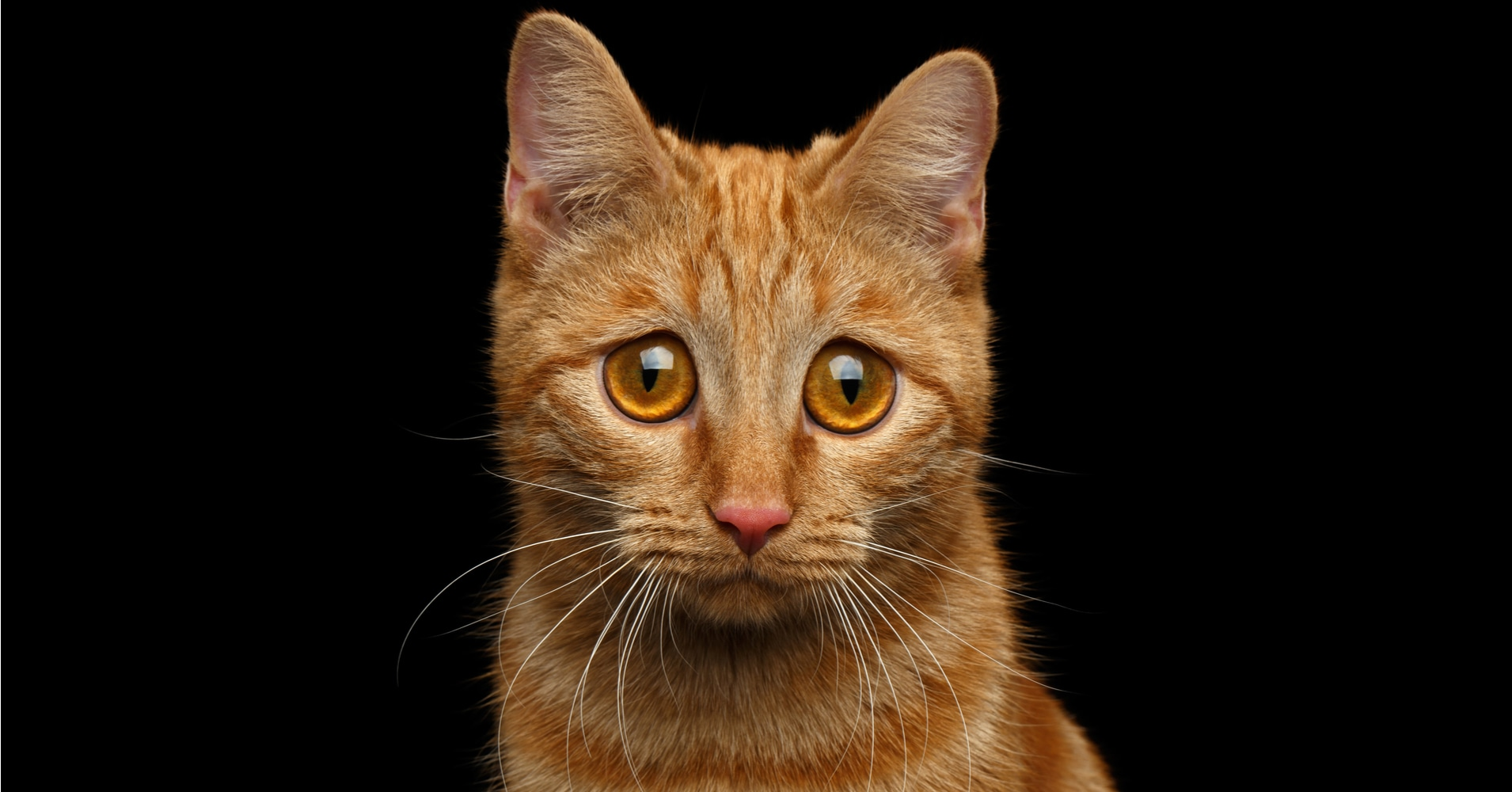 Unique Girl Cat Names - Quiz - Quizony com