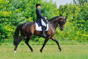 Dressage Of A Horse Quiz