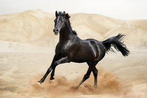 How Much Do You Know About Horses?