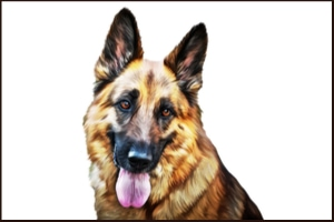 How Well Do You Know German Shepherds?