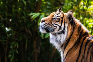Quizony com - Quizzes about Animals
