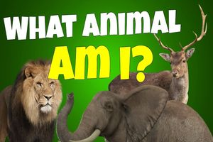 What Animal Am I? No. 2