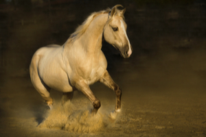 What Horse Breed Are You? No. 2