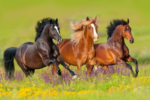 What Horse Breed Are You?