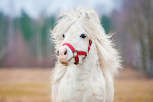 What Horse Breed Fits Your Personality?