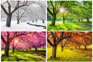 What Is My Favourite Season?