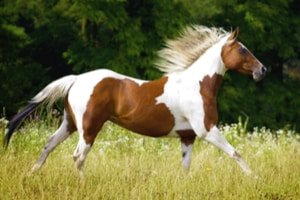 Which Horse Breed Are You? No. 2