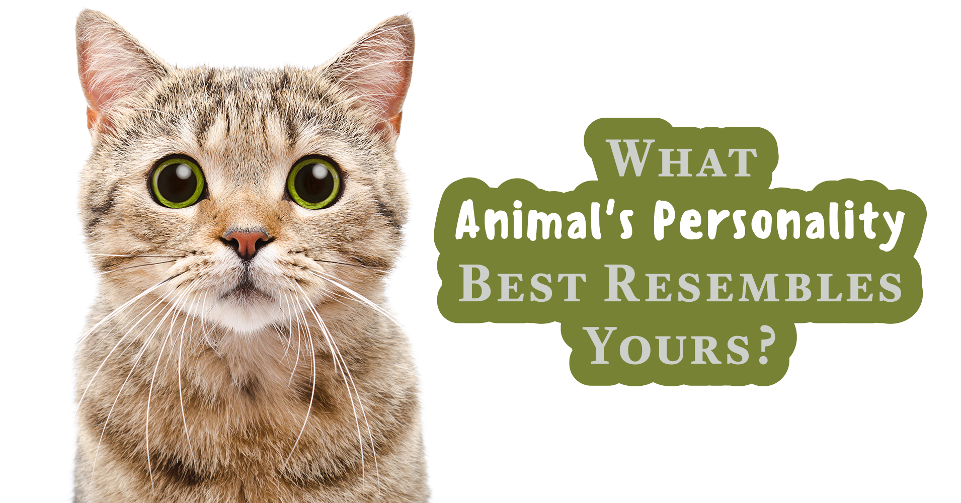animal personality What's your animal personality type the myers-briggs type indicator is an expansion of carl jung's ideas about personality types, expressed in one of 16 four-letter acronyms that express your.