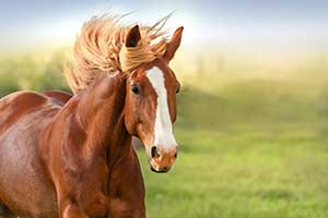 Horse Quiz: What Horse Are You?