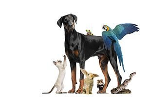 What Kind Of Pet Should You Adopt?