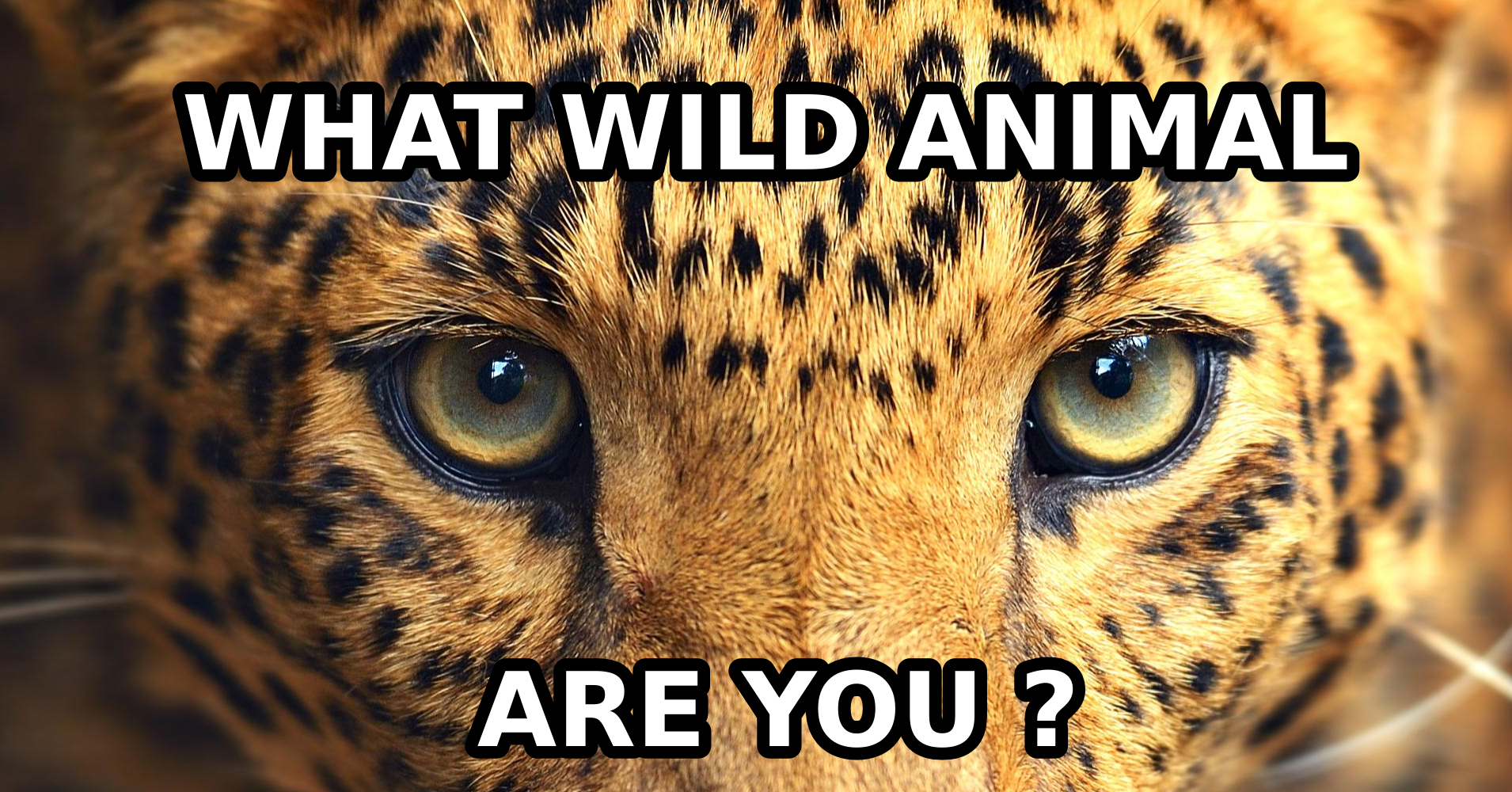 what kind of wild animal are you  - quiz
