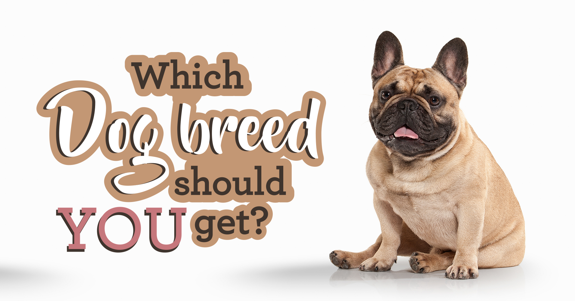 dog breed selector which dog should i get   quiz