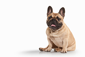 Dog Breed Selector: Which Dog Should I Get?